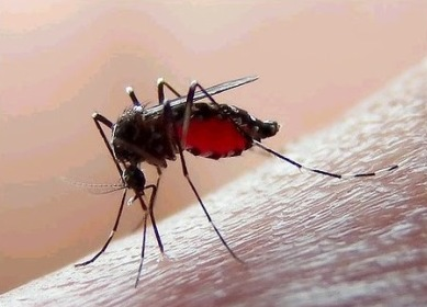 Health authorities said there is no dengue transmission in evacuation centres. Photo credit: PAHO.