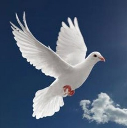 A dove symbolising the Holy Spirit. Photo credit: Poetry Nest blog.