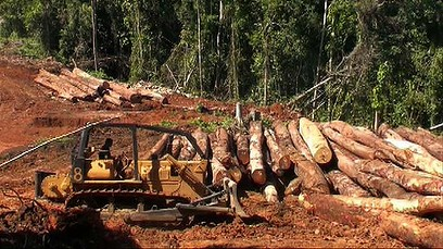 Logging in the Solomon Islands. Photo credit: SIBC.