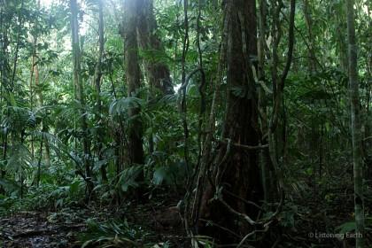 Rain forests in Solomon Islands. Photo credit: mobile.ztopics.com.