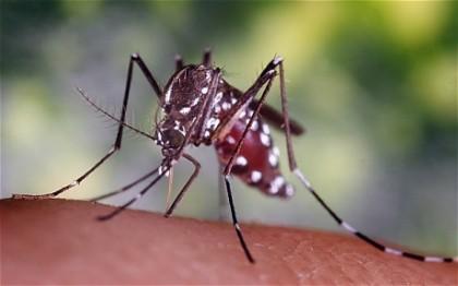 A mosquito bite. Photo credit: www.telegraph.co.uk