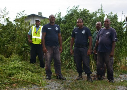 The RSIPF officers who conducted the raid, with the marijuana plants displayed at the background. Photo credit: RSIPF.