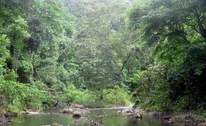 A Guadalcanal River and its surroundings - part of the biodiversity. Photo credit: en.wikipedia.org
