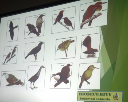 Birds that are prohibited under the Bio-Security Act to be pests. Photo credit: SIBC.