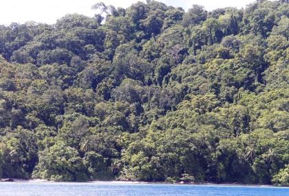 A dense forest near Mono. Photo credit: SIBC.