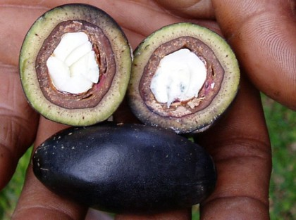 Ngali nuts in the Solomon Islands. Photo credit: www.flickr.com