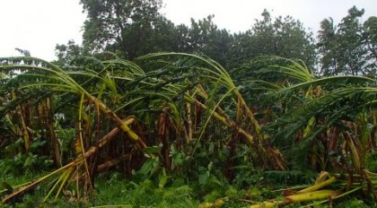 Effects of the recent Tropical Cyclone Pam in Temotu Province. Photo: Courtesy of World Vision Solomon Islands.