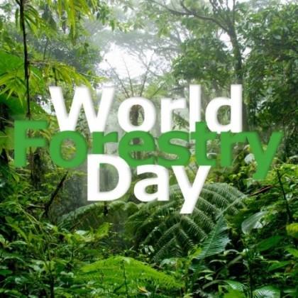 World Forest Day. Photo credit: essayspeechwala.com