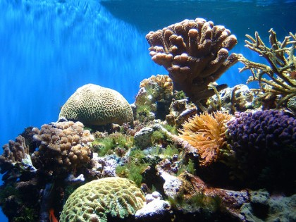 Life underwater. Photo credit: SIBC.