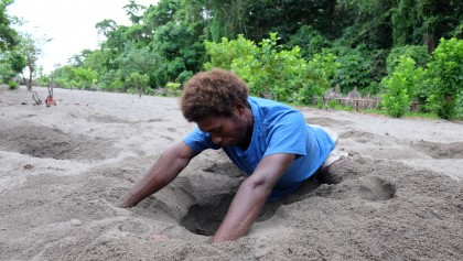 A man from Panueli village struggles to find megapode eggs on a morning dig.