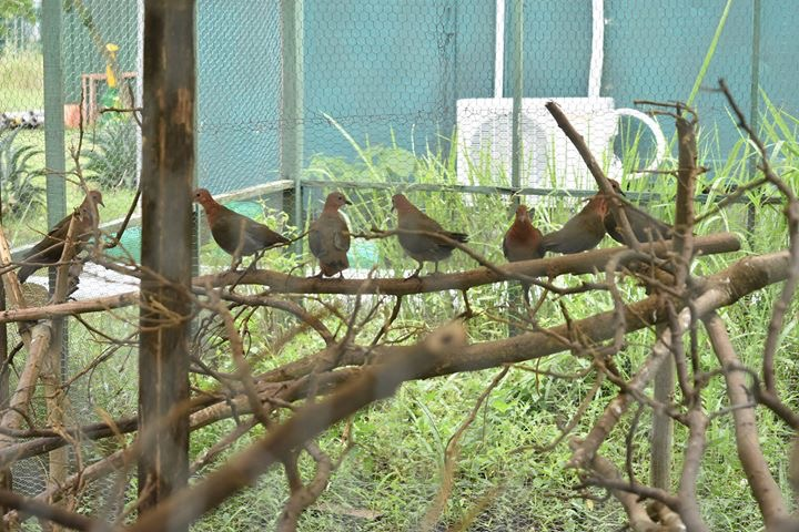 109 endangered birds seized from exporters