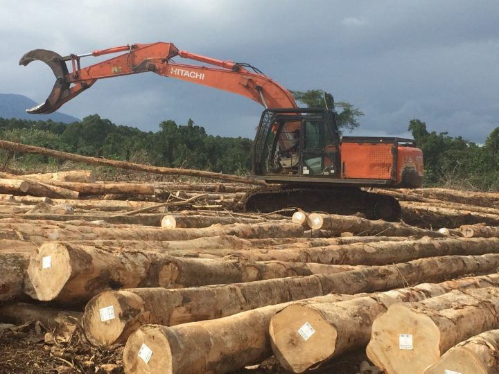 Government increases attempts to reform the forestry sector