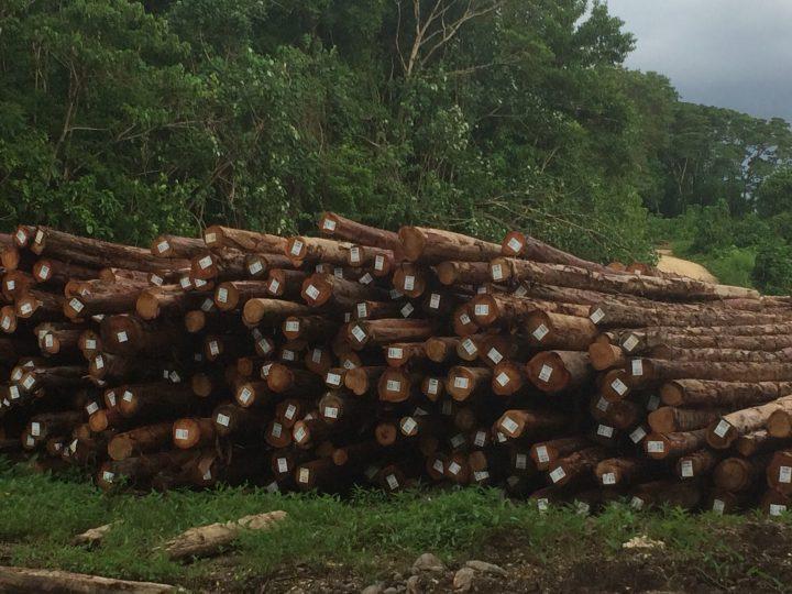 MOFR refutes log export figures by Global Witness