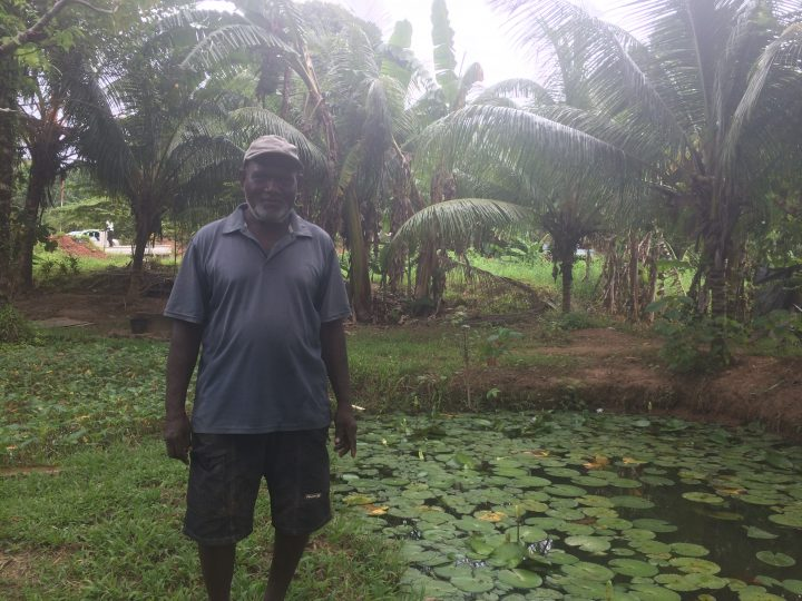 Former builder turns to commercial tilapia farming
