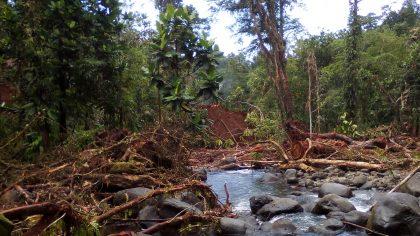 SI may ban round log exports by 2023
