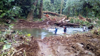 Current logging rate is still unsustainable: Wale