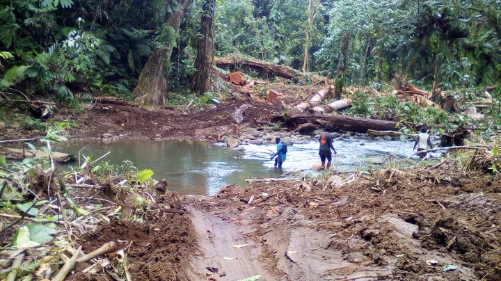 Logging company allegedly defies Forestry orders