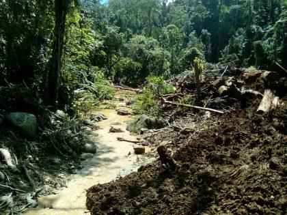 Logging activity threatens Honiara's water source