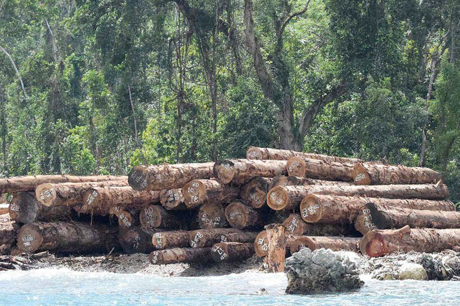 Log export to further fall by July this year